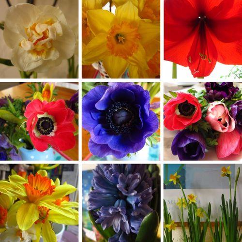 FlowersFeb2012