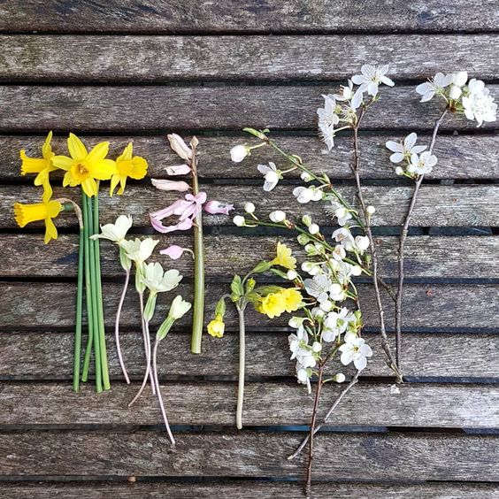 Allotmentflowers