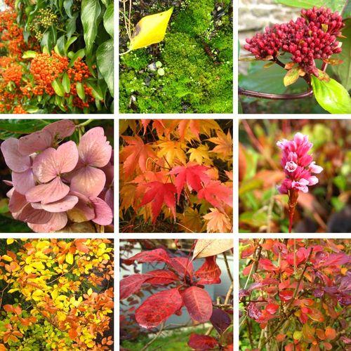 AutumnColour