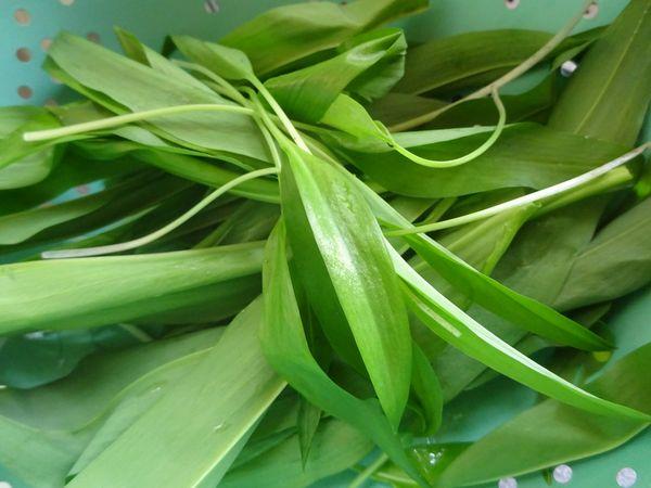 Attic24: Wild Garlic Pesto